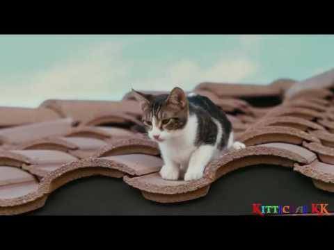 หนังเฉินหลง 2010 วิ่ง หอบ เหนื่อย สายลับ ไม่มีโฆษณา
