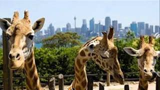 top 10 zoo in the world all cuntry most papular