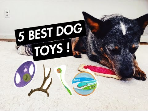 Australian Cattle Dog - 5 BEST Heeler Toys