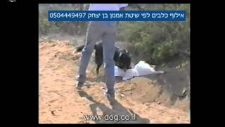 Search And Rescue Dog Training