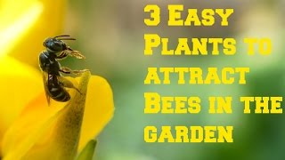 3 EASY Plants To Attract Bees & Pollinators In  The Garden