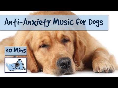 Anti Anxiety Music for Dogs! Separation Anxiety Music, Calming and Soothing Sounds - 동영상