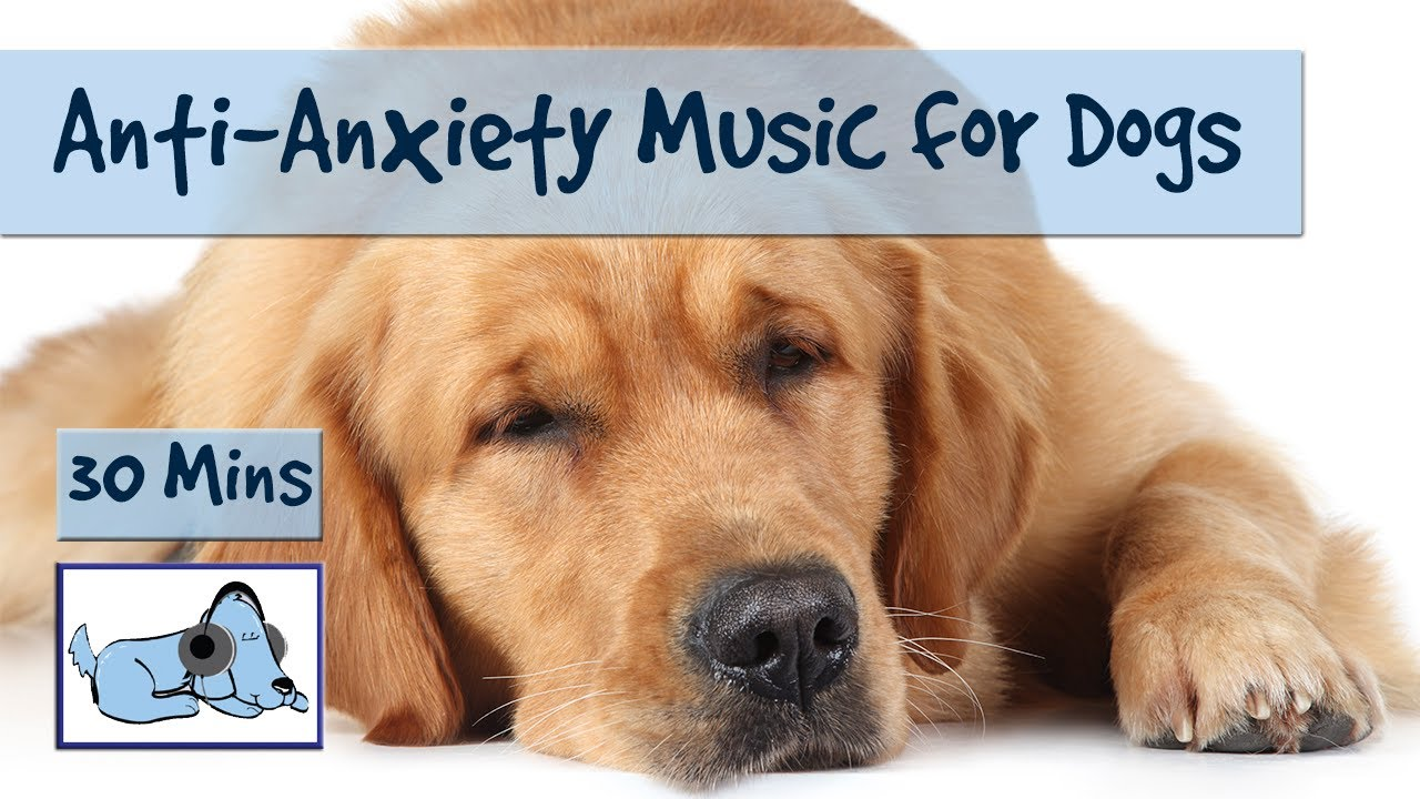 anti anxiety music for dogs! separation anxiety music, calming and