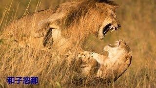 【動物 かわいい】クレイジーな動物は、ライオン、虎、鹿、ワニの戦い =...