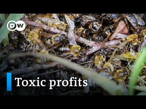 Bayer and the bees | DW Documentary