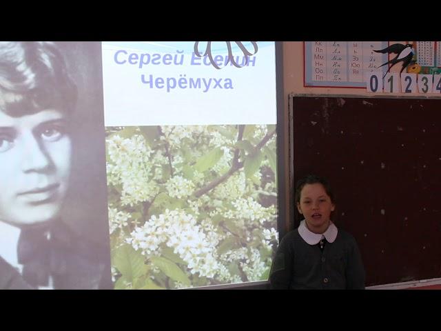Изображение предпросмотра прочтения – АнастасияИващенко читает произведение «Черемуха» С.А.Есенина