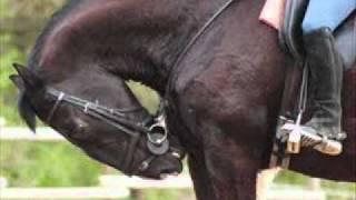 Ein Pferd erzählt !  (Pferde sind keine Maschinen !!!) Bitte Beschreibung lesen!