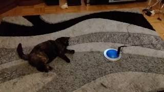 Игрушка для кошки с мотором