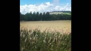 Brian May Rose Bay Willow Herb 15082018