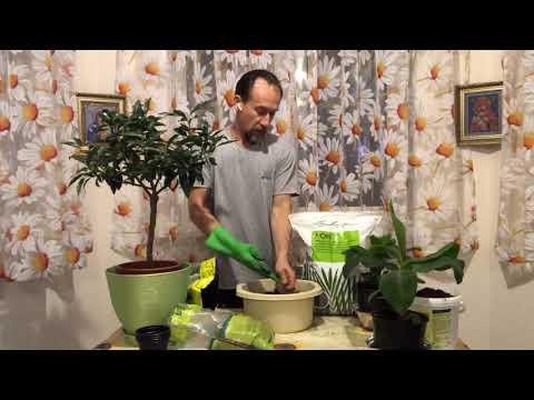 Питательная земля для цитрусов