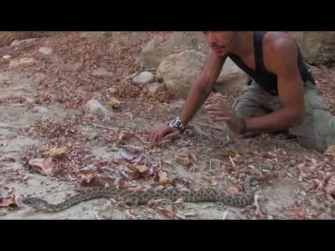 Snakes in Mountain Lion Territory | Nick The Wrangler