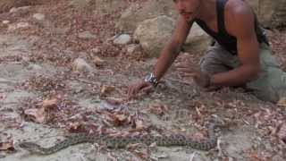 Snakes in Mountain Lion Territory | Nick The Wrangler