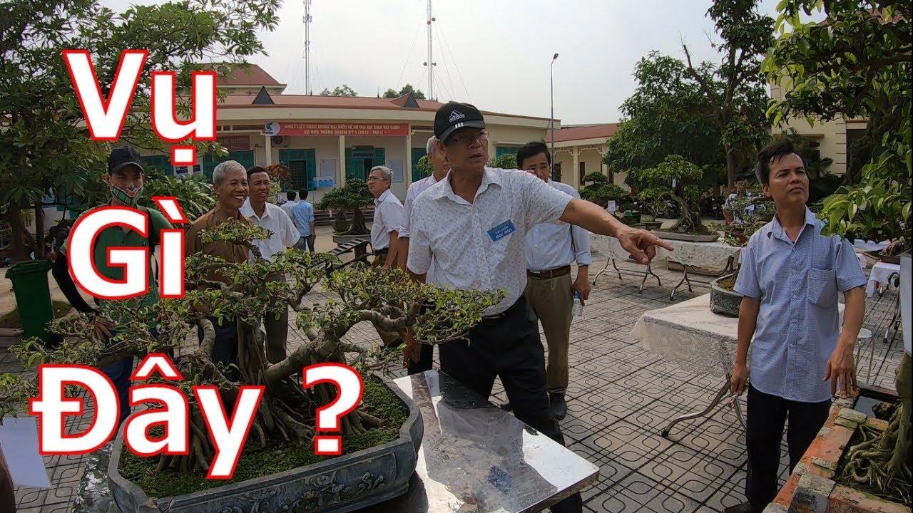 Có vụ gì mà đông vui thế này-cây cảnh-bonsai-BShp