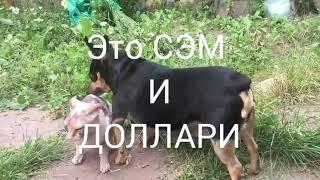 ПОЦЕЛУЙ ЛЯЛЮ/УКРАИНСКИЙ ЛЕВКОЙ/ЛЫСАЯ КОШКА