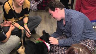 Hamilton - St. John Ambulance Therapy Dog Program At Mohawk College.