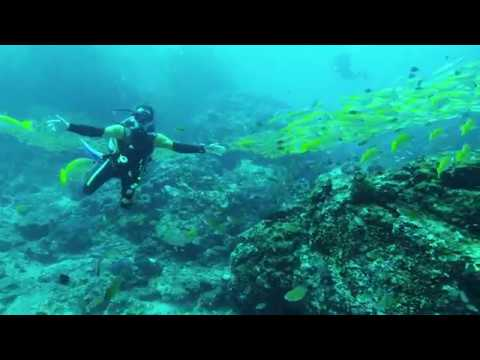 Косяки рыб андаманского моря, Симиланские острова 2017