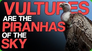 vultures-are-the-piranhas-of-the-sky-who-would-win-the-skeleton-war