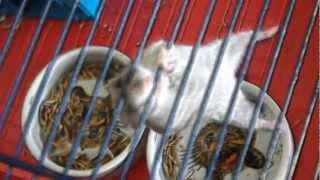 [Trailer] Jetzt kommt der Hamster