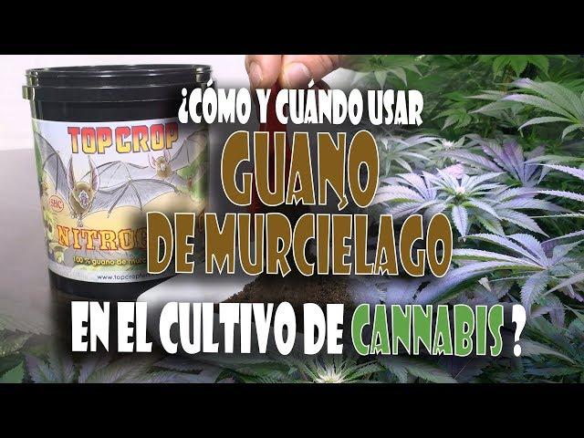 Cómo y cuándo aplicar guano como abono orgánico paso a paso en cannabis y marihuana. TOP CULTIVO 39
