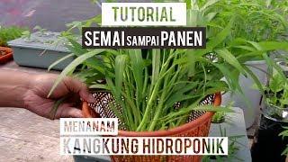 Download lagu Cara Menanam Kangkung Hidroponik