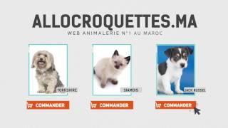 ALLOCROQUETTES.MA : Animalerie N°1 au maroc