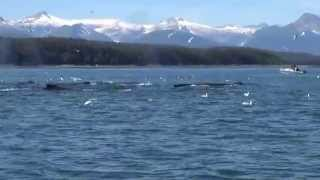 Alaska - 7-Day Voyage of the Glaciers - Juneau Whale Watching - Aug 2, 2014