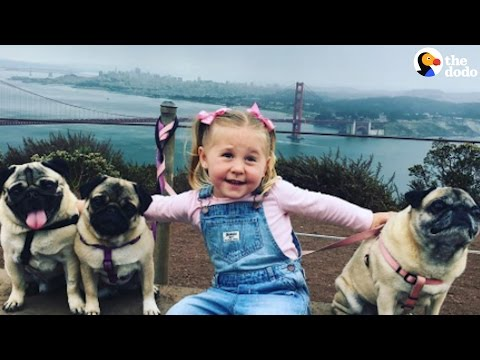Little Girl and 3 Pugs are Best Friends | The Dodo