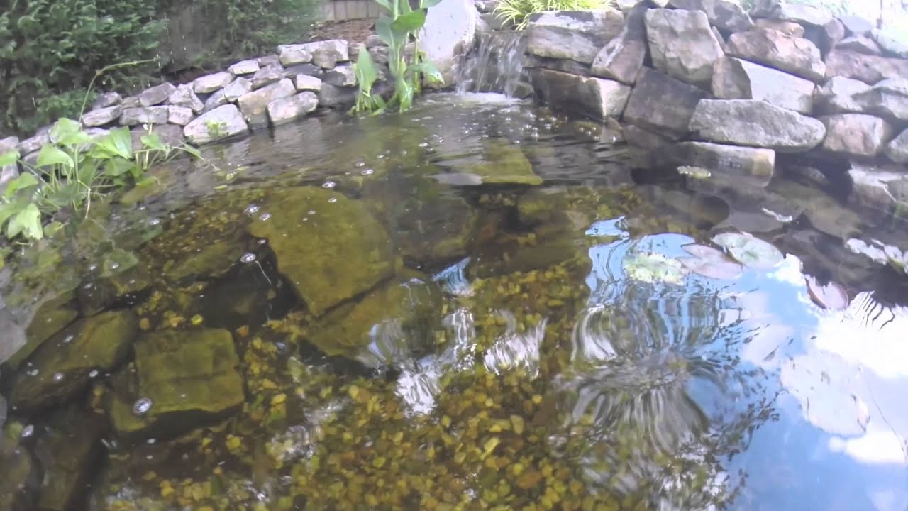 Dirty pond clean pond youtube for Keeping ponds clean without filter