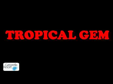 TROPICAL GEM QUE VIVA LA SALSA 1 6 2018 by Maurizio