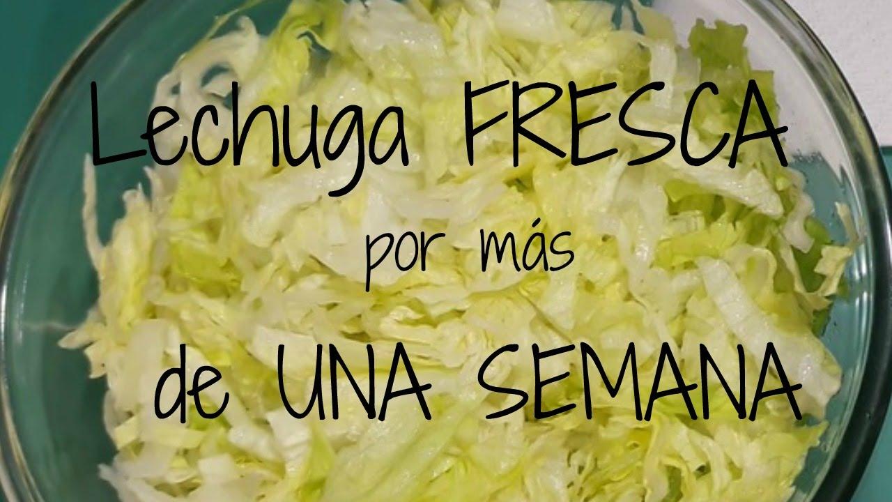 Lechuga Fresca Por Más De Una Semana ツfozita Iniestaツ Youtube