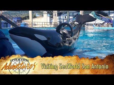 Visiting SeaWorld San Antonio For The First Time - Attractions Adventures