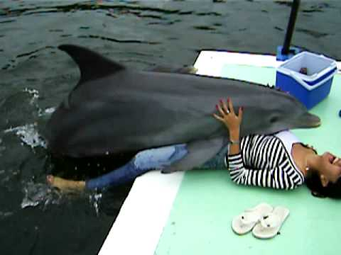 Human having sex with a dolphin