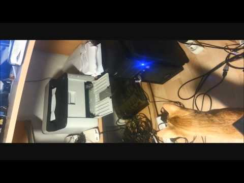 Ориентальный кот Рыжа и принтер. Oriental cat and printer