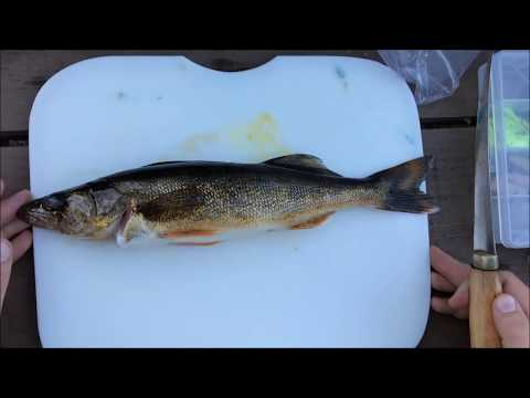 How to Fillet Walleye!! ALL BONELESS MEAT NO WASTE