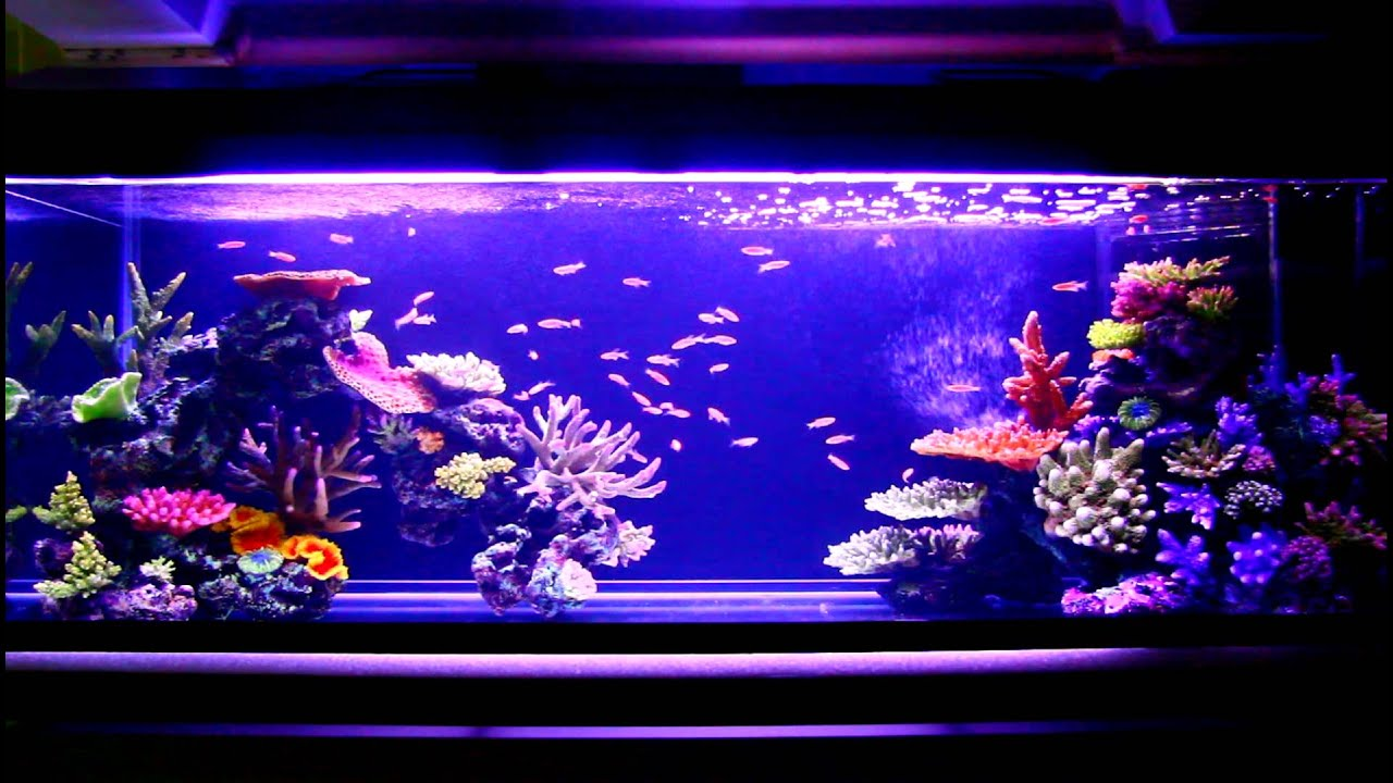 Seashell Home Decor Artificial Coral Reef Aquarium Update Youtube