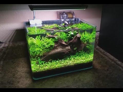 New nano the planted tank forum for Plante nano aquarium