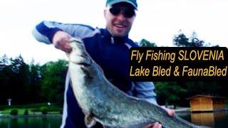 Fly Fishing Slovenia - Lake Bled