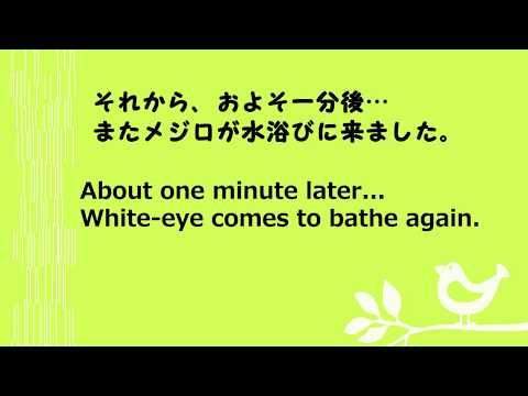 メジロの水浴び(8) 4コマ動画 White-eye bathing (8) four clips