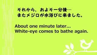 メジロの水浴び(8) 4コマ動画 White-eye bathing (8) four clips thumbnail