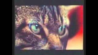 Az prijde kocour (Όταν η γάτα έρχεται.) 1963