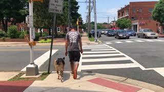 2yo German Shepherd (Odin) Best Dog Trainers in Virginia