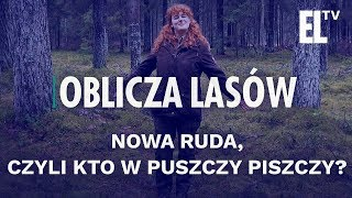 Nowa Ruda, czyli kto w puszczy piszczy? | Oblicza Lasów #50