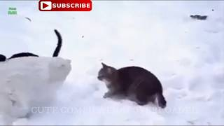 Try not laugh Funny Cats videos compilation   cute compilation overloaded