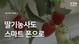 딸기농사도 스마트 폰으로 / YTN 사이언스