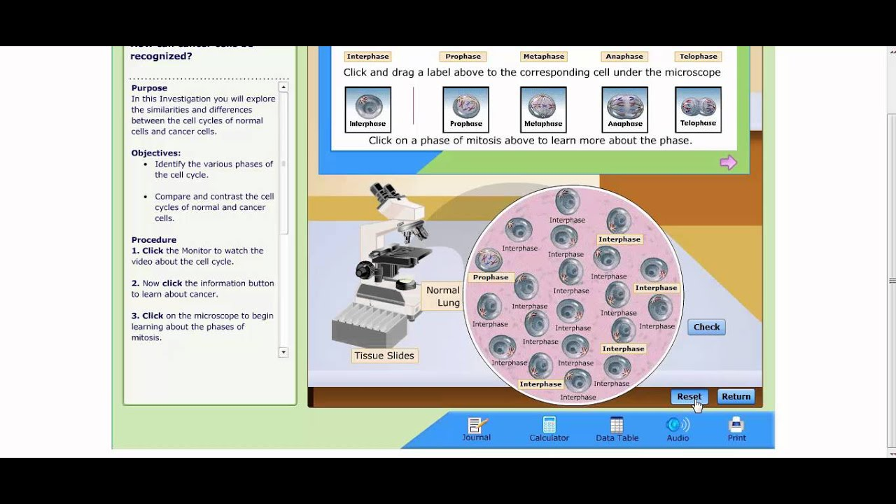 Uncategorized Virtual Lab The Cell Cycle And Cancer Worksheet cell cycle and cancer virtual lab instructions youtube instructions