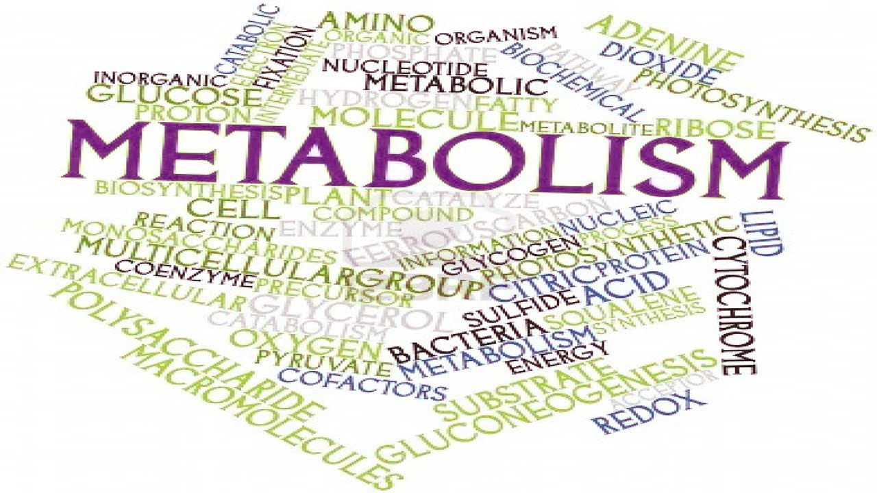 Control Your Metabolism // Make It Slow or Fast -- // Dream Body //  Subliminal //