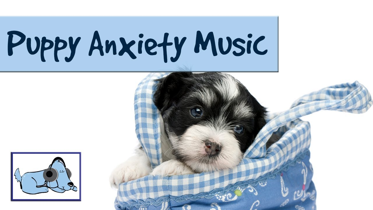 Puppy Anxiety Music Especially For Dogs And New Puppies With