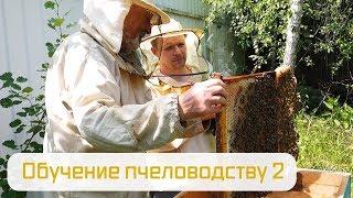 Обучение пчеловодству ч.2