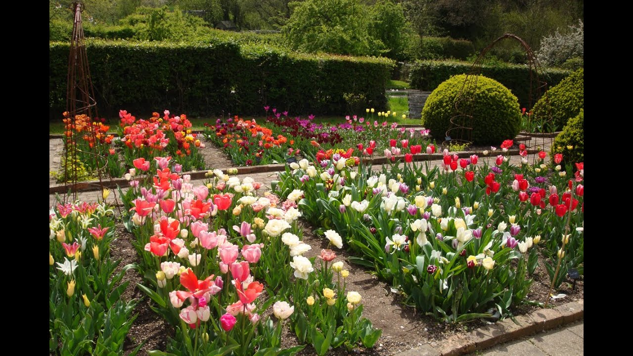 Top Tips For Growing Tulips Youtube