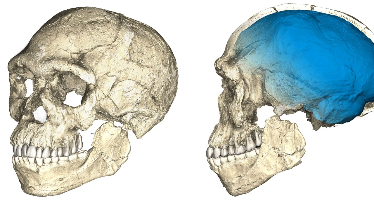 Oldest Homo sapiens bones ever found shake foundations of